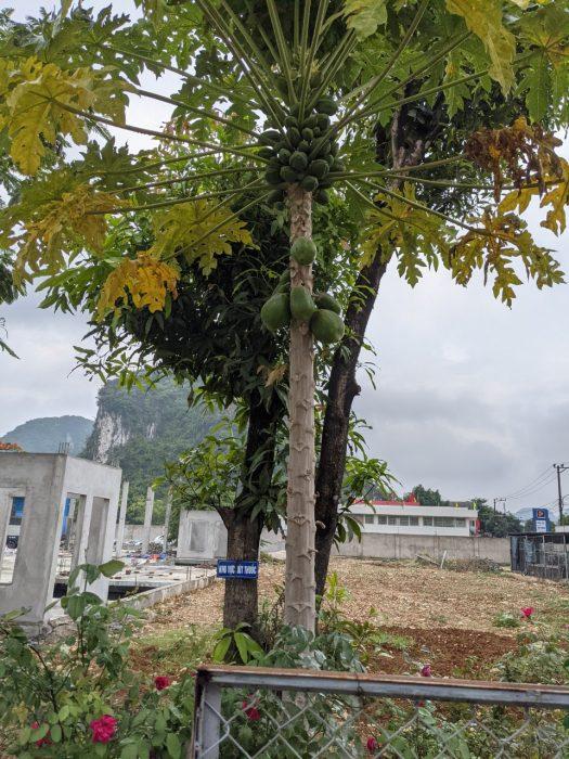 Một góc cây xanh của nhà máy